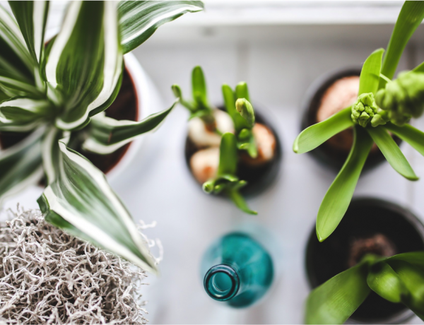 Garden_Interior_IndoorPlants